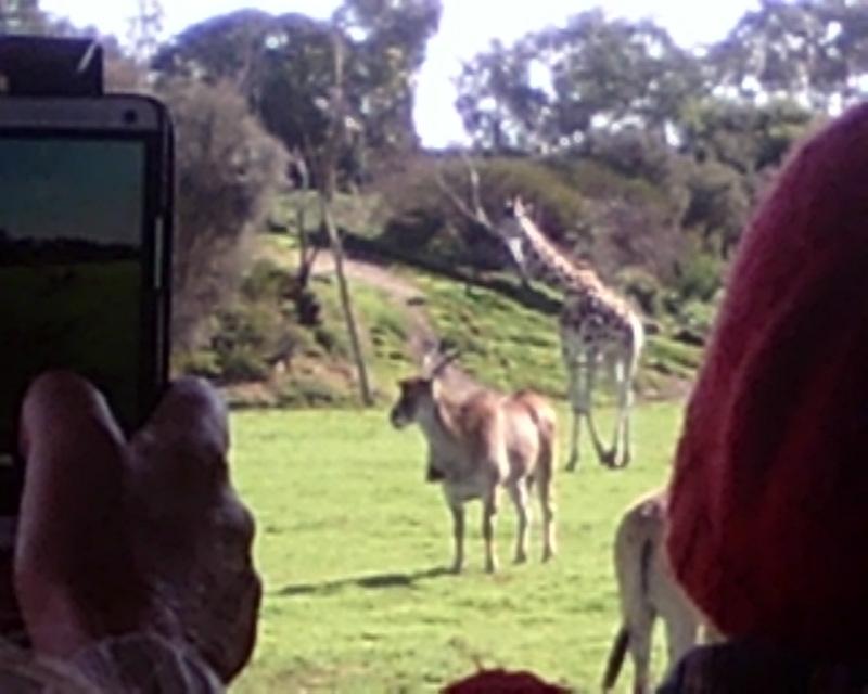 Taking photos at Werribee